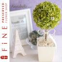 結婚祝い 観葉植物 アイテム口コミ第7位