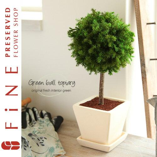 枯れない観葉植物 誕生日ギフト インテリア プリザーブドグリーン/グリーンボールトピアリー…...:fine-flower:10000074