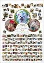 � ワン� ホー 平成最後のいぬ年カレン� ー2018 小型犬