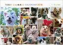 � ワン� ホー 平成最後のいぬ年卓上カレン� ー2018 小型犬
