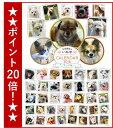 \ワンダホー/平成最後のいぬ年カレンダー2018【ミックス犬】