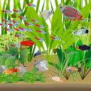 水槽 熱帯魚 【6種38匹が驚きの3000円!】初心者にオススメの3,000円セットA【熱帯魚  セット】【秋のヒーターセール開催中っ!】