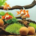 サンミューズ ゼオライトの玉 金魚用 【新着】【水槽/熱帯魚/観賞魚/飼育】【生体】【通販/販売】【アクアリウム】