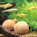 サンミューズ ゼオライトの玉 メダカ用 【新着】【水槽/熱帯魚/観賞魚/飼育】【生体】【通販/販売】【アクアリウム】