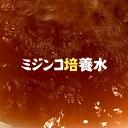 (熱帯魚 活餌)ネオスオリジナル ミジンコ 培養水 1L  ...