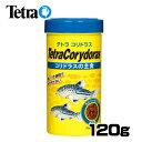 テトラ コリドラス 120g【水槽/熱帯魚/観賞魚/飼育/生体/通販/販売/アクアリウム】