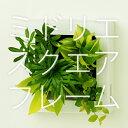 【midorie】ミドリエ スクエアフレーム/全6色8タイプ【壁掛け観葉植物】【ギフト/プレゼント】
