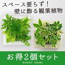 【midorie 5%オフ】ミドリエ スクエア フレーム 2...