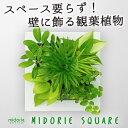 【midorie】ミドリエ スクエアフレーム/全4色5タイプ【壁掛け観葉植物】【ギフト/プレゼント】