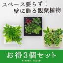 【midorie 10% オフ】ミドリエ スクエア フレーム...