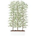 スーパーSALE対象 人工観葉植物 ベンジャミナ スターライト パーテション 180 (器:ガーデンペット) 91613 フェイクグリーン パーテシ..