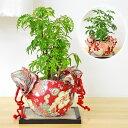 ミニ観葉植物 和柄小風呂敷ラッピング ミニ畳付き
