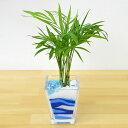 ミニ観葉植物 テーブルヤシ カラーサンド植え スクエアガラス