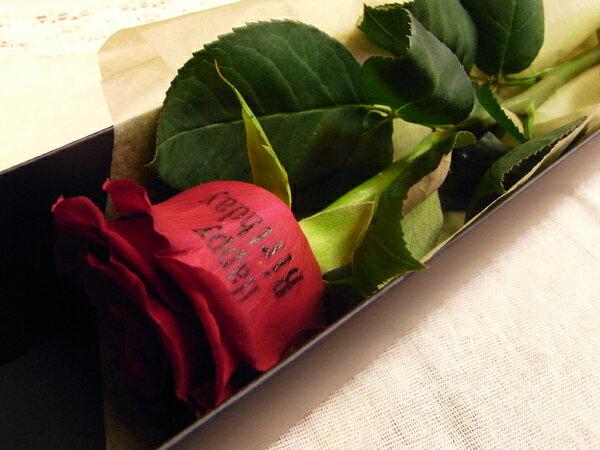 Rose1box tn2