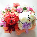 母の日に!【送料無料】トイプードル(紅白ペア・2匹)のフラワーアレンジメントまるでぬいぐるみみたい☆ふわふわでキュンとしちゃう♪かわいい生花カーネーションギフト