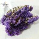 ハーバリウムに!ドライフラワー スターチス(淡い紫)3〜5本