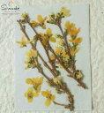 【S-751】押し花 レンギョウ 3本ナチュラル素材 花材 ...