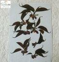 【S-742】押し花 桜の葉7枚ナチュラル素材 花材 押し花...