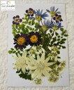 【S-782】押し花 花材 いろいろセットクモマグサ3枚、フ...