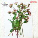 【S-672】ミゾソバ10本レジンアクセサリー、スマホケース、キャンドル、フォトフレームなどお花のハ