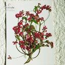 【S-316】そばの花(ピンク)10本押し花額やレジンアクセサリー制作などハンドメイド素材として人気