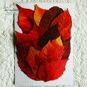 【S-324】ウルシの葉(うるし・漆)虫喰いあり紅葉15枚押し花額やレジンアクセサリー制作などハンドメイド素材として人気です飛騨で手作りしています。国産品の安心品質です!