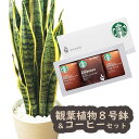 【あす楽】『サンセベリア8号鉢+スターバックスコーヒーギフトセット』 【全国送料