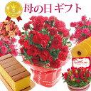 \まだ間に合う/ 母の日 プレゼント 花 ギフト 選べる9種類 選べる花鉢&リースとスイーツセット 母の日ギフトカー…