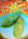 ポポーの苗【実生苗】 4号ポット バナナとマンゴーをミックスしたような濃厚な香りと甘みが特徴です!ビタミン・ミネラルをたっぷり含んだ栄養価の高いフルーツです♪ポポーの苗【実生苗】 5号ポット 【ポポー 苗】