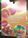 赤ミニレモンの苗 4号ポット オレンジみたい?!でもすっぱ〜い!!四季咲き自家結実性のレモンです。鉢植えでもたくさん実のなる品種です。