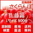 【販売中!】【送料無料】北海道産さくらんぼ「佐藤錦」Lサイズ 500gセット【放射能検査済】