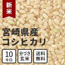 New_miyazaki_g_10kg