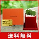 電報 結婚式 誕生日 お祝い電報 祝電 送料無料 観葉植物 【ハートホヤ メッセージ】