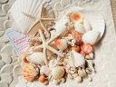 天然素材 A品 ヒトデ ホタテ サンゴ 色々な貝殻セット 300gパック ハワイインテリア 工作材料