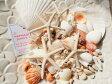 天然素材 A品 ヒトデ ホタテ 白いサンゴ きれいな貝殻セット 500gBIGパック ハワイインテリア ブライダルディスプレイ 手作り素材 クラフト工作材料 マリン雑貨