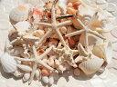 天然素材 ハワイアンインテリア 貝殻セット 大容量