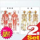 【さらに選べるおまけ付き】【検査・医療器具】医道の日本社 人体解剖学チャート骨格筋 ポスター 2枚セット(骨格筋・骨格) パネルなし - 縦86×横62cm 表面仕上げはラミネート加工。