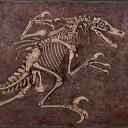 FRP恐竜オブジェ ヴェロキラプトルの化石 【即納可】 置物 白亜紀 肉食恐竜 獣脚類 標本 博物館 店舗 イベント ディスプレイ 実物大 等身大 リアル