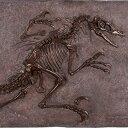 FRP恐竜オブジェ ヴェロキラプトルの化石(ブロンズ仕立て) 置物 白亜紀 肉食恐竜 獣脚類 標本 博物館 店舗 イベント ディスプレイ 実物大 等身大 リアル
