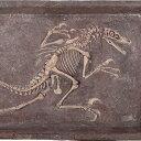 FRP恐竜オブジェ ヴェロキラプトルの化石 置物 白亜紀 肉食恐竜 獣脚類 標本 博物館 店舗 イベント ディスプレイ 実物大 等身大 リアル