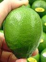 【業務でお使いの方必見!】芳醇な香りの高級香酸柑橘 「ライム」