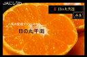 【送料無料】愛媛・西宇和 日の丸みかん千両  5kg  S お歳暮贈答用【11月下旬頃発送日付指定不可】