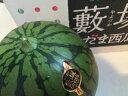 群馬県ブランド西瓜 藪塚こだますいか(小玉スイカ)4玉〜5玉...