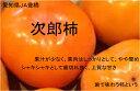 愛知県産JA豊橋 次郎柿 【秀品】2Lサイズ 36玉 贈答用【11月上旬頃発送日付指定不可】