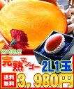 【母の日 父の日】【送料無料!】濃厚でとろけるような強烈な甘味が自慢♪宮崎県産[完熟マンゴー2L1玉