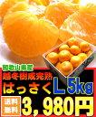 【3月上旬より出荷】濃い甘酸っぱさが人気です!【送料無料】和歌山県由良産[越冬樹成はっさくL5kg]