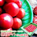 フルーツトマト 高糖度 高知県 [徳谷ト