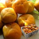 種なし訳あり 和歌山 平たねなし柿