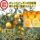 【送料無料】(国産メイヤーレモン 1kg)マイヤーレモン 防腐剤・ワックス不使用レモン)防ばい剤不使用レモン レモン 国産レモン