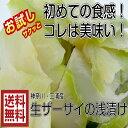 【送料無料】青木さんの三浦 ザーサイ浅漬け200g×2パック 浅漬け 国産 ザーサイ 国産ザーサイ